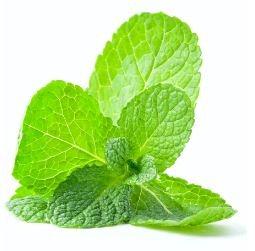 mint-leafes