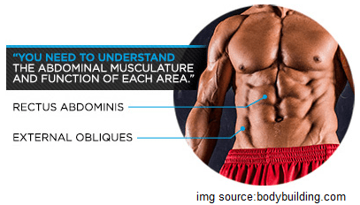 anatomy-of-abs