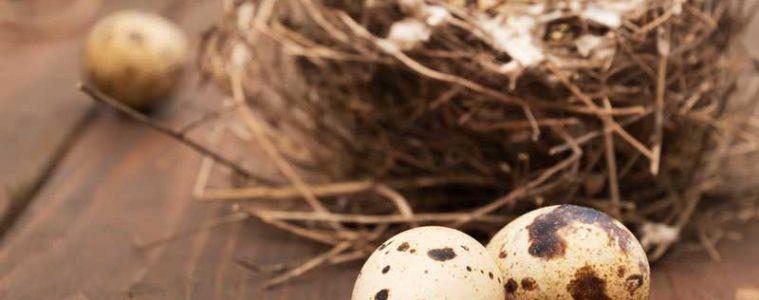 quail eggs essential health guide