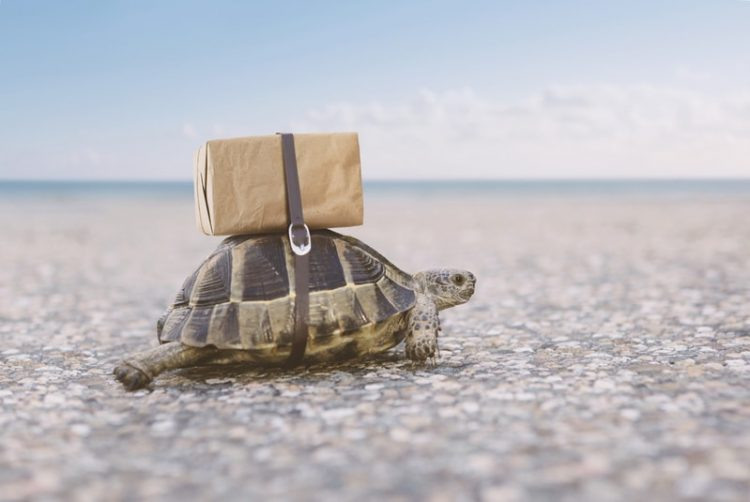 A cute turtle carrying a package on its back